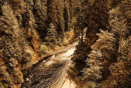 Canada, Landscape, Gully, Canyon, Ravine, Forest, Trees