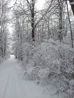 Road Less Traveled, Winter Scene, Snow, Nature, Forest