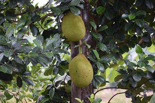 Jackfruit, Fruit, Home, Food, Sweet, Organic, Healthy