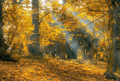 Autumn, Leaves, Light Rays, Fall, Nature, Leaf, Yellow