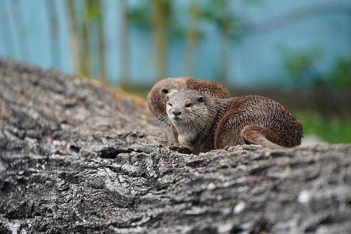 Otter, Tree, Water, Lake, Cheerful, Cute, Sweet, All