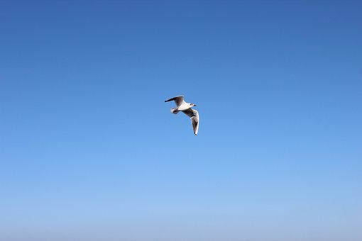 Bird, Air, Sky, Flight, Cold, Plumage, Spring, Park