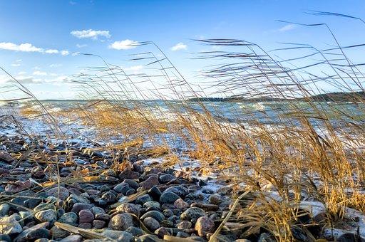 Sea, Reed, Beach, Wave, Nature, Sky, Water, Finnish