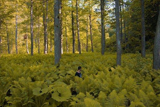 Forest, Yellow, Fern, Rize, Turkey, Wild, Nature