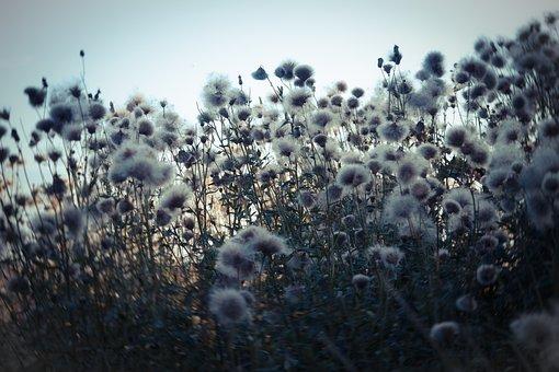 Meadow, Field, Hay, Summer, Landscape Photo, Park