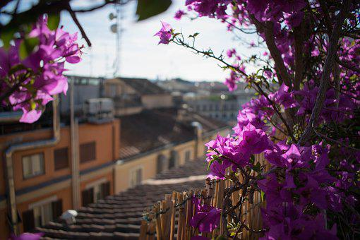 Flower, Rooftop, Italy, Terrace, Garden, Vacation