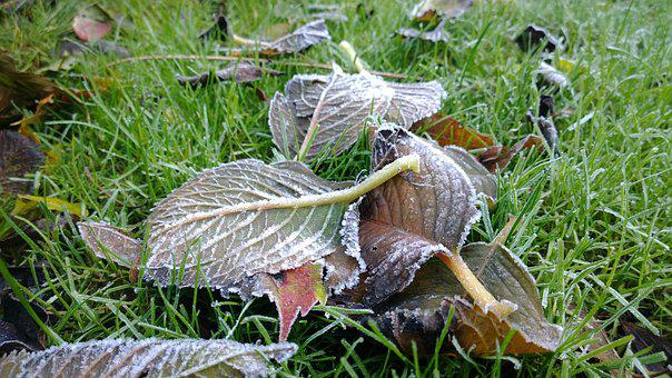 Ripe, Nature, Cold, Winter, Frost, Ice, Freezing