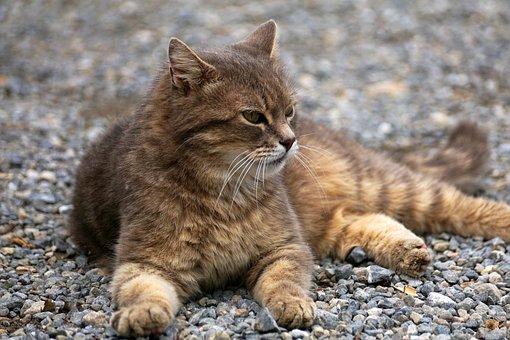 Cat, Fur, Pet, Animal, Cat's Eyes, Cat Portrait