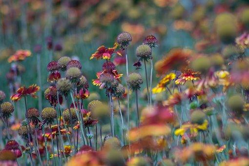 Flowers, Garden, Nature, Spring, Green, Summer