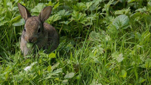 Rabbit, Meadow, Park, Casting, City, Green, Nature