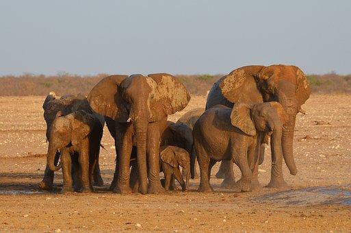 Elephant, Etosha, Africa, Namibia, Water Hole