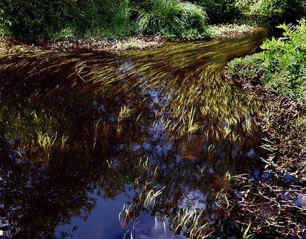 Stream, Brook, River, Weeds, Bog, Swamp, Nature
