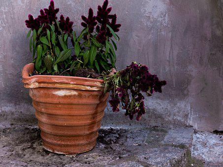 Flowerpot, Plant, Flowers, Leaves, Flower, Spring
