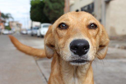 Dog, Animal Abuse, Street, Animal, Love, Compassion