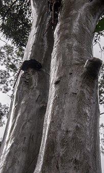 Trees, Rain Forest, Forest, Rain, Wet, Australia