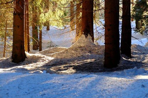 Mountains, Jizera Mountains, Snow, Trees, Light