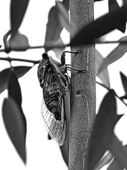 Cicada, Crayfish, Olive, Vera, Summer Cri-cri
