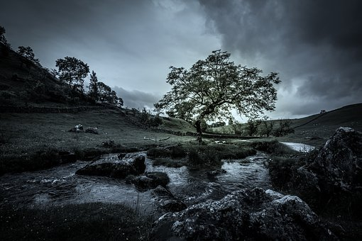 Tree, Steam, Mood, Moody, Nature, Water, Landscape