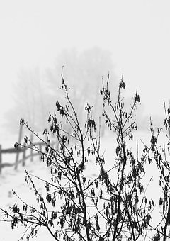 Winter, Bush, Tree, Plant, Snow, Wintry, Cold, White