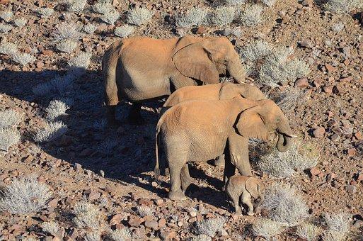 Elephant, Africa, Namibia, Wild Elephants, Animals