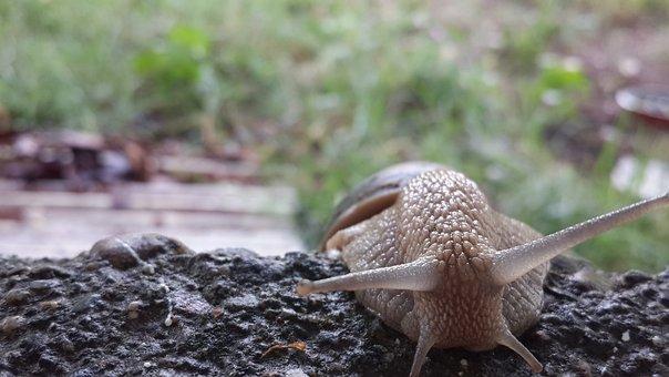 Snails, Animal, Slugs, Forest