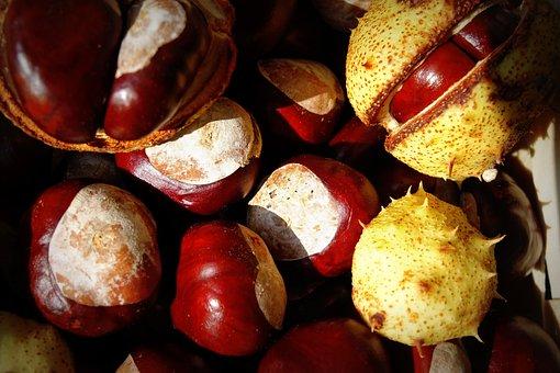 Chestnut, Autumn, Trees, Fruits, Buckeye, Nature, Fruit