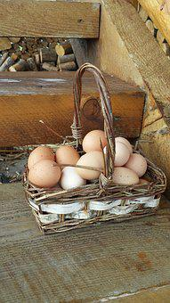 Eggs In One Basket, Eggs, Basket, Farm, Chickens