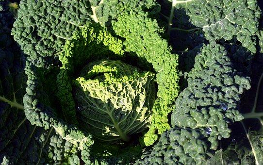 Savoy, Vegetables, Kitchen, Cook, Eat Green, Food