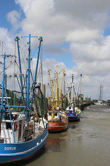 Shrimp, Ebb, Dorum, Fishing Port, North Sea