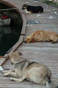 Harbor, Port, Girne, Kyrenia, Dog, Marine, Dogs