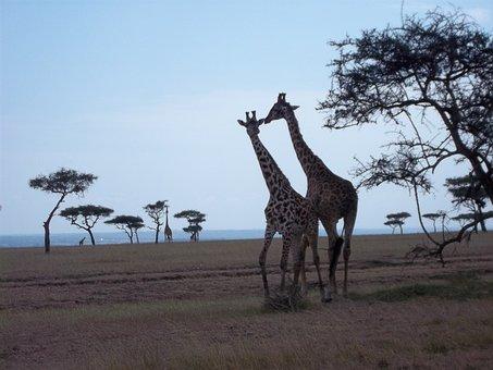 Masai, Mara, Kenys