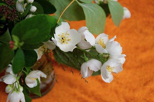 Flowers, White, Jasmin, Orange, Fragrance