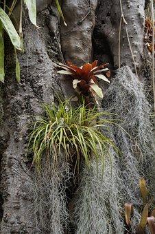 Parasite, Parasitic Plants, Host, Snort, Tree, Plant