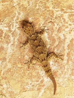 Gecko, Dragon, Lizard, Texture, Camouflage
