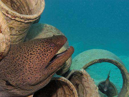 Moray, Fish, Underwater, Diving, Hidden, Mediterranean