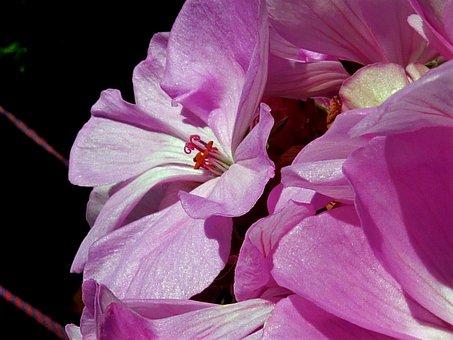 Orchid, Bloom, Flowers, Blossom, Bloom, Botanic