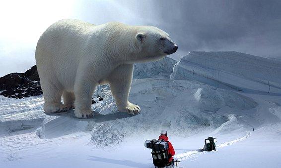 Polar Bear, Glacier, Hike, Mountain Hike, Roped, Cold