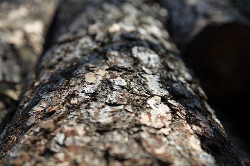 Shell, Nature, Wood, Tree, Firewood, Trunk, Cut