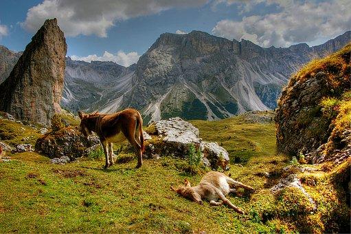 Dolomites, Val Gardena, Nature, Landscape, South Tyrol