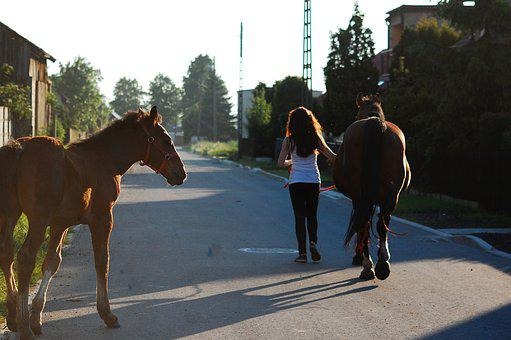 The Horse, Horses, Offspring, Village, Nature, West