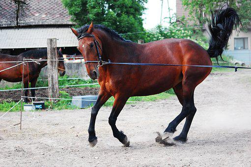 Mare, The Horse, Silesian, Galop, Traffic, Attack