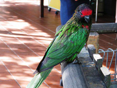 Parrot, Bird, Beautiful Bird, Cute Bird