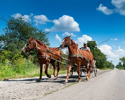Horses, Coach, Road, Ternopil, тернопіль, Ukraine, Sun