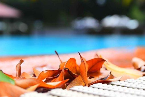 Swimming Pool, Leaves, Pool, Swimming, Water, Leaf