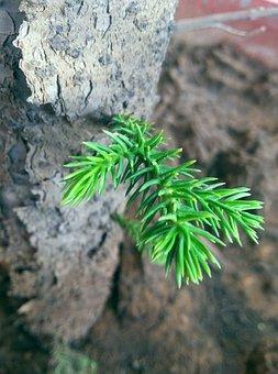 Grow, Green, Lea, Nature, Growth, Leaf, Environmental