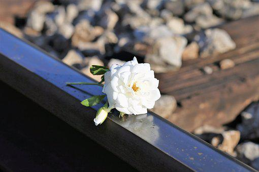 Tiny Fragile White Rose, Railway, Remembering