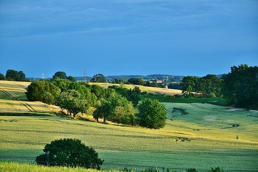 Landscape, Twilight, Field, Cereals, Trees, Land