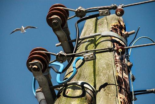 Seagull, Current, Strommast, Wood, Wooden Mast