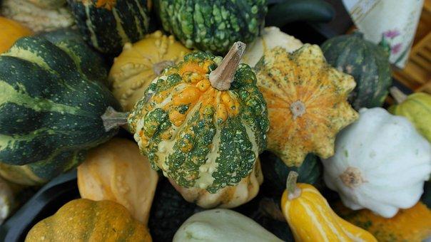 Decorative Squashes, Pumpkins, Green, Autumn