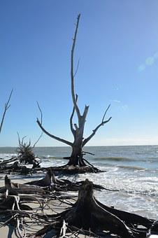 Tree, Wood, Dead, Dead Plant, Beach, Sea, Holiday